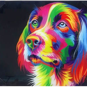 color dog