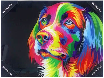 color dog 1